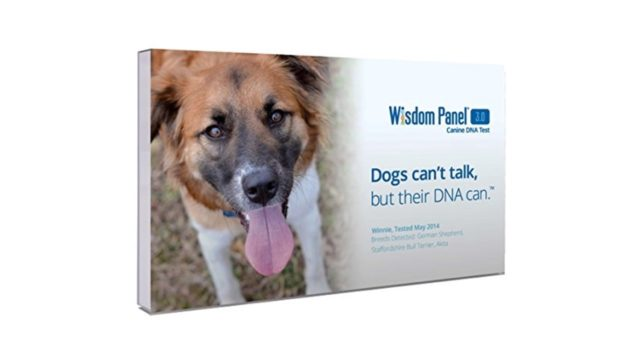 Wisdom Panel 3.0 Breed Identification DNA Test Kit Review & Ratings