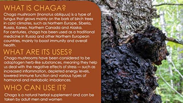 Chaga Mushrooms Capsules | 1800mg Per Serving | VH Nutrition 30 Servings | Chaga Mushroom Powder | Immunity and Anti-Aging Support Supplement with Natural Ingredients